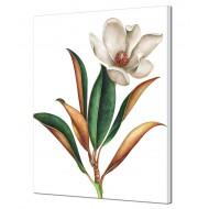 Картины на холстеКартины на холсте Абстракция - Картина на холсте (канвас) KH851