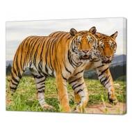 Картины на холстеКартины на холсте Животные - Картина на холсте (канвас) KH1093