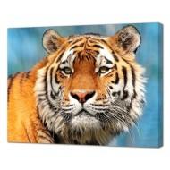 Картины на холстеКартины на холсте Животные - Картина на холсте (канвас) KH1094