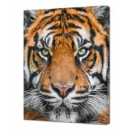 Картины на холстеКартины на холсте Животные - Картина на холсте (канвас) KH1095