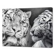 Картины на холстеКартины на холсте Животные - Картина на холсте (канвас) KH1096