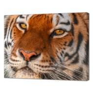 Картины на холстеКартины на холсте Животные - Картина на холсте (канвас) KH1098