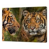 Картины на холстеКартины на холсте Животные - Картина на холсте (канвас) KH1101