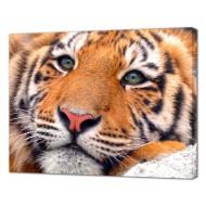 Картины на холстеКартины на холсте Животные - Картина на холсте (канвас) KH1103