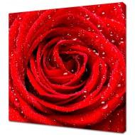 Картины на холстеКартины на холсте 40х40 - KH426