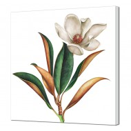 Цветы - Картина на холсте 25_46х46