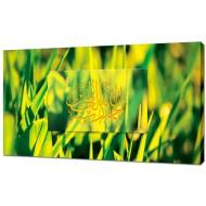 Картины на холстеКартины на холсте 50х100 - KH438