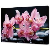 Картины на холстеКартины на холсте 50х70 - Картина на холсте (канвас) KH627