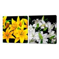 Картины на холстеКартины на холсте 50x50 - Картины на холсте (канвас) KH334