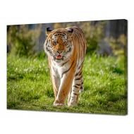Картины на холстеКартины на холсте 50х70 - Картина на холсте (канвас) KH1051