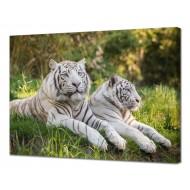 Картины на холстеКартины на холсте 50х70 - Картина на холсте (канвас) KH1052