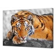 Картины на холстеКартины на холсте 50х70 - Картина на холсте (канвас) KH1053