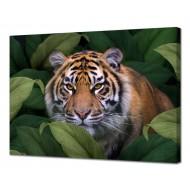 Картины на холстеКартины на холсте 50х70 - Картина на холсте (канвас) KH1055