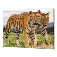 Картины на холстеКартины на холсте 50х70 - Картина на холсте (канвас) KH1056
