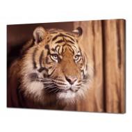 Картины на холстеКартины на холсте 50х70 - Картина на холсте (канвас) KH1060