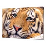 Картины на холстеКартины на холсте 50х70 - Картина на холсте (канвас) KH1070