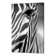 Картины на холстеКартины на холсте Животные - Картина на холсте (канвас) KH79