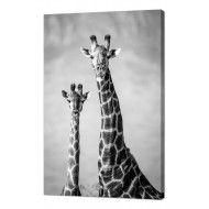 ЛюдиЛюди Животные - Картина на холсте (канвас) KH98
