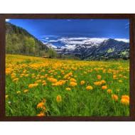 ЦветыЦветы Распродажа - Фото постер в раме 2 см - А352_40X50