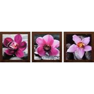 ЦветыЦветы 18x54 - К691-107