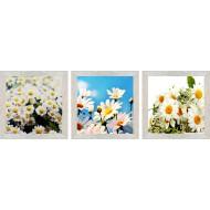 ЦветыЦветы 18x54 - MG5965