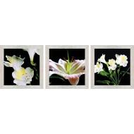 ЦветыЦветы 18x54 - Модульная картина Т47 - Размер 18х54