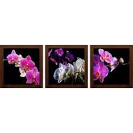 ЦветыЦветы 18x54 - Модульная картина TC165 -  Размер 18х54