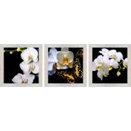 ЦветыЦветы 18x54 - TC166_18х54